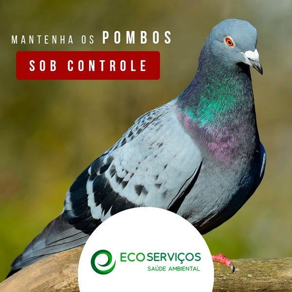Controle de Pombos EcoServiços