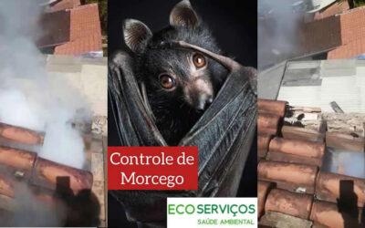 Controle de morcegos: tudo o que você precisa saber