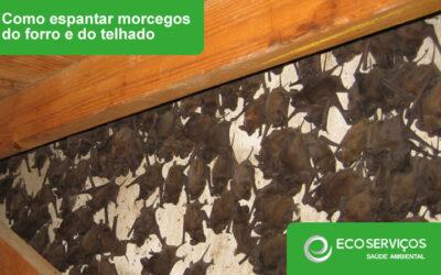Como espantar morcegos do forro e do telhado